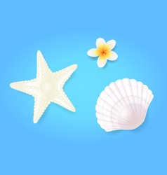 snow-white shellfish and starfish with pale exotic vector image