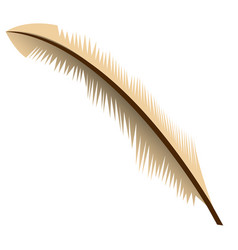 isolated feather vector image vector image