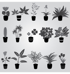 Home houseplants and flowers in pot grayscale vector