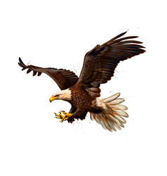 portrait of a bald eagle from a splash vector image