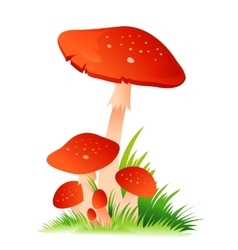 Red Mushroom Amanita with grass on white vector image