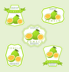 the theme pomelo vector image