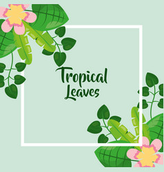 tropical leaves summer vector image