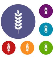 Big grain spike icons set vector
