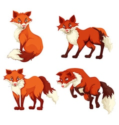 Four foxes with red fur vector