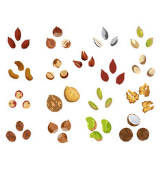 nut icons set cartoon set of nut icons for vector image
