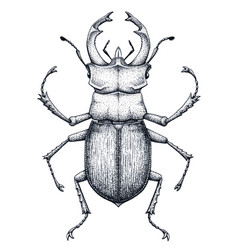 Stag beetle tattoo art lucanus cervustattoo vector