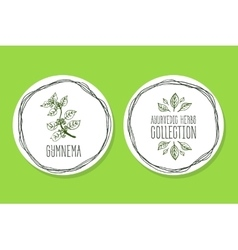Ayurvedic Herb - Product Label with Gymnema vector