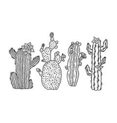 Cactus plant set sketch engraving vector