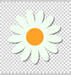 chamomile flower icon in flat style daisy on vector image