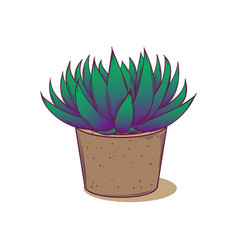 decoration plant succulent astroloba tenax for vector image