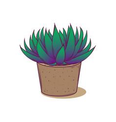 Decoration plant succulent astroloba tenax vector