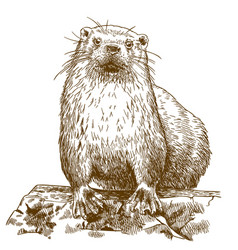 Engraving drawing of otter vector