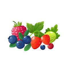 isolated cartoon berries red raspberry fresh vector image