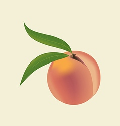 Peach Fruit Icon vector