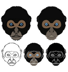 Spider monkey face view colored vector