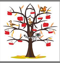 Tree rowanberry late autumn vector