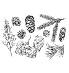 set of hand drawn plants vector image