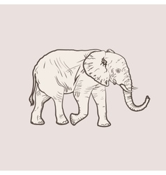 Big elephant in profile walking vector