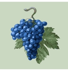 Cluster grapes with a leaf vector