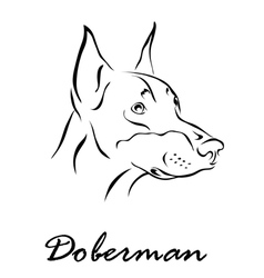 Doberman 1 vector
