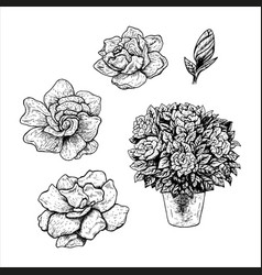 Hand drawn set gardenia flowers in a pot vector