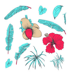 hand drawn of tropical plants and flower vector image vector image