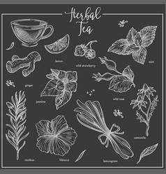Herbs chalk sketch icons for herbal tea cafeteria vector