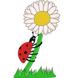 Ladybird climbing on the flower vector
