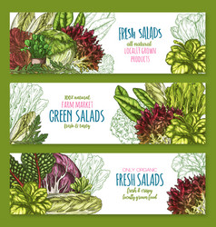 salads leafy vegetables banners set vector image