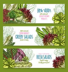 Salads leafy vegetables banners set vector