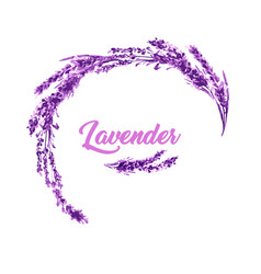 Watercolor or aquarelle paintings of lavender vector