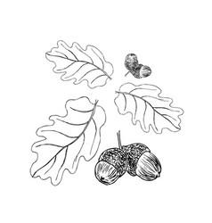 oak branch with leaves in black ink art vector image vector image