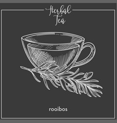Herbal tea with rooibos in elegant glass cup vector