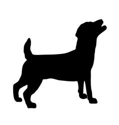 Jack Russel Terrier Silhouette vector