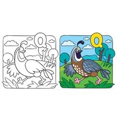 Little quail coloring book Alphabet Q vector
