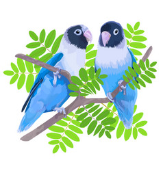 pair blue masked lovebirds vector image