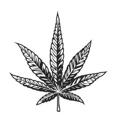 Vintage cannabis leaf template vector