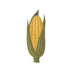 corn icon isolated on white vector image
