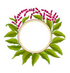 Amaranth plant frame on white background vector