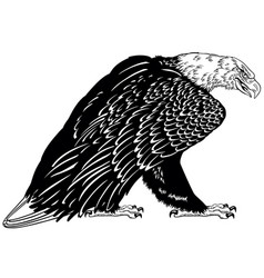 Bald eagle black and white vector