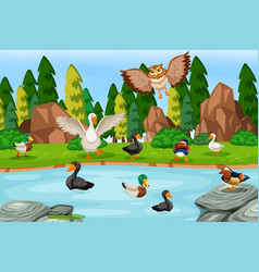 Many duck at the pond vector