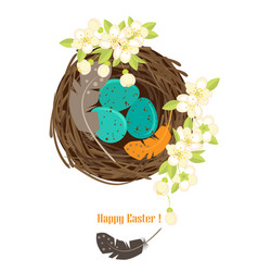 birds nest with eggs vector image