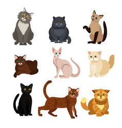 cat different breeds set vector image