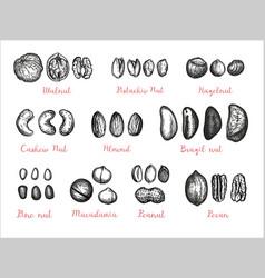 nuts big set vector image