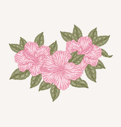 pink hibiscus flowers and leaves hand drawn vector image