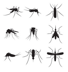 Set of black silhouette carrier mosquitoes vector