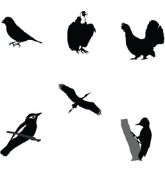 Birds world vector
