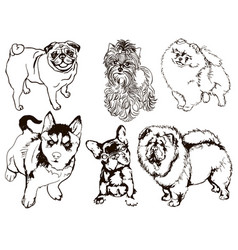 colorful set dogs different vector image