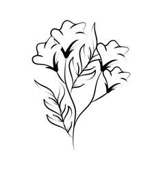minimalist tattoo flower line art herb sketch vector image